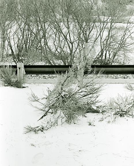 http://www.conorwootenphoto.com/files/gimgs/34_snowbushedit.jpg