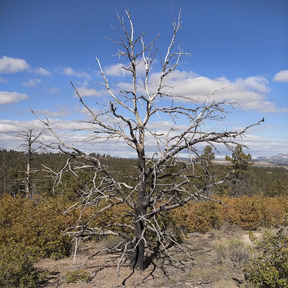 http://www.conorwootenphoto.com/files/gimgs/34_tree.jpg
